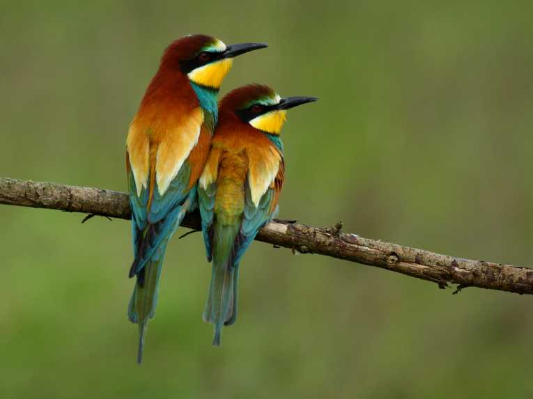 biodiversity-loss-species-extinction-global-change_2512