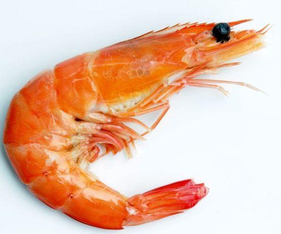 Shrimp1_1
